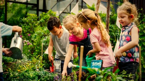 Училищна зеленчукова градина